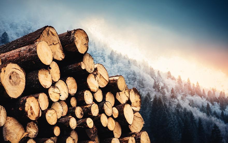 Producent drewna opałowego Woodmak – Lednogóra